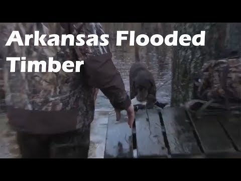 Arkansas Duck Hunting in the timber and open water!  S6 E5