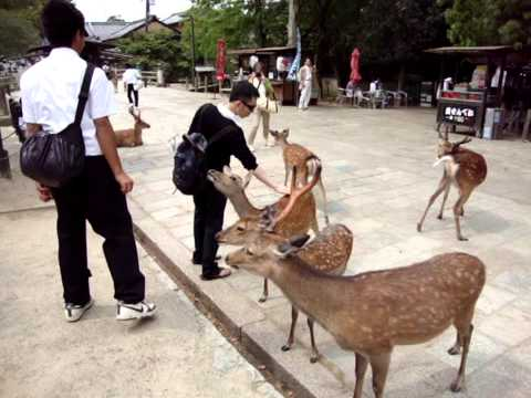 Nara Deer Park, Japan (bowing deer) :D