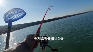 라조사의 바다낚시 -안산시 대부도- 갑오징어 바다낚시 …