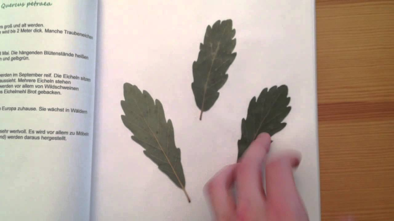Blattherbarium Anfertigen Pflanzensammlung Anlegen Youtube