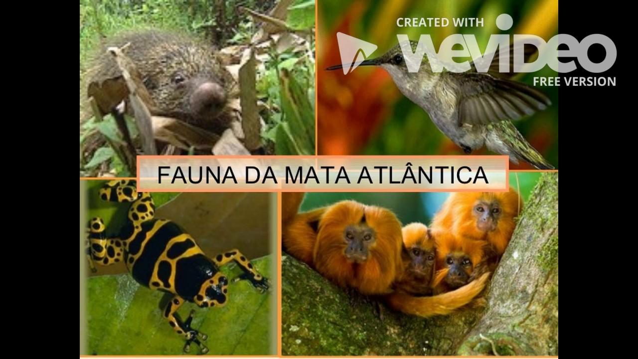 Gambar Biomas Da Mata Atlantica Flora Fauna Youtube Gambar