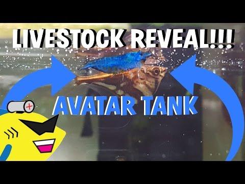 AVATAR AQUARIUM: LIVESTOCK REVEAL!!!