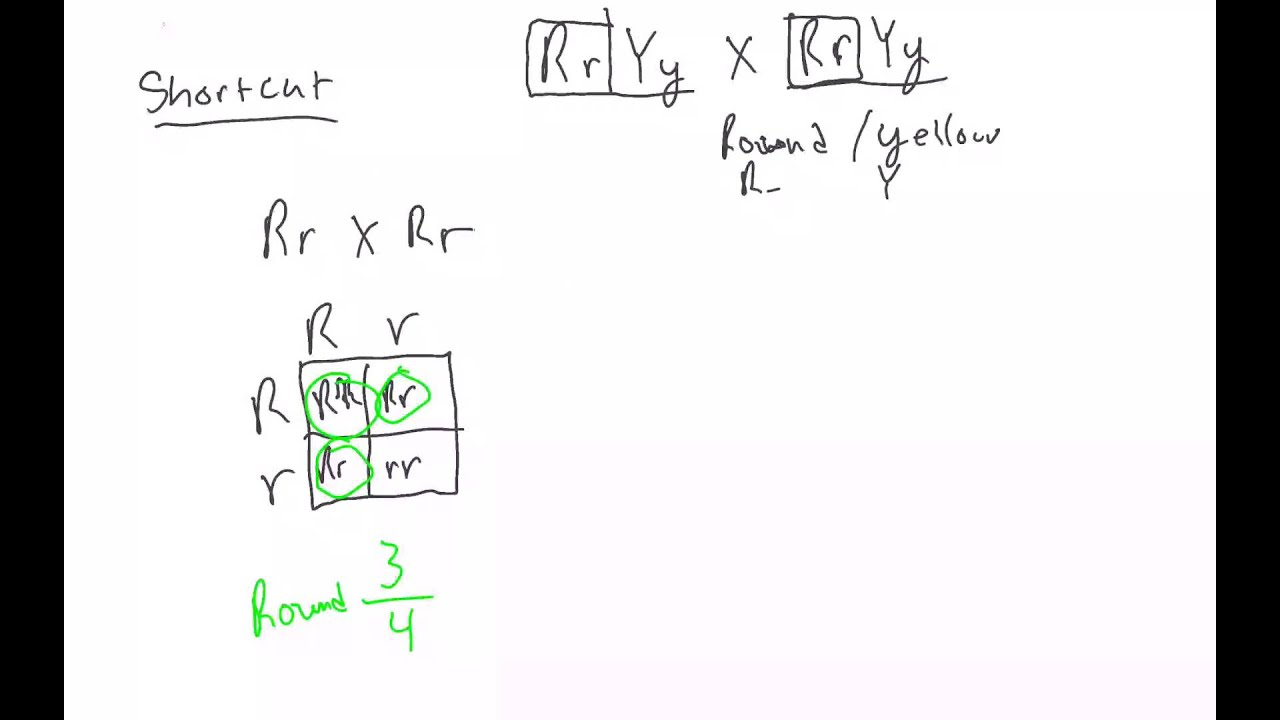 Dihybrid Cross Shortcut