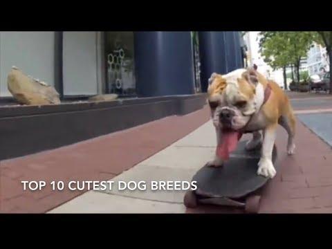 Top 10 Cutest Dog Breeds