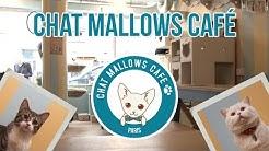 Un bar à chats dans Paris ! - Chat Mallows Café | Pause Découverte