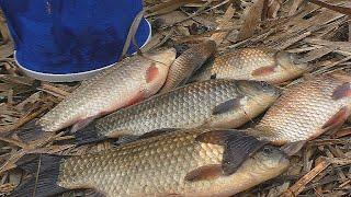 Рыбалка Снасти Ловля карася в проводку на поплавок в последний день февраля My fishing