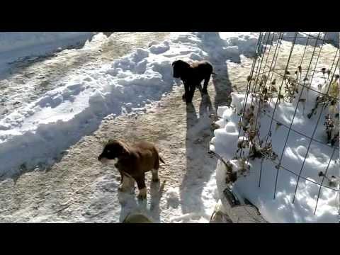 Winter time in Lower Rosebud, South Dakota