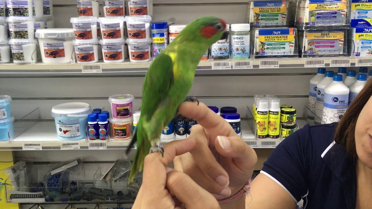 Bird Breeders Melbourne - Victorian Bird Co    CALL 1300 MY BIRD