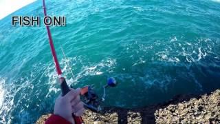 64cm brown groper fishing - off nsw rocks