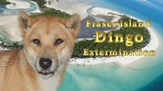 Fraser Island Dingo Thumbnail