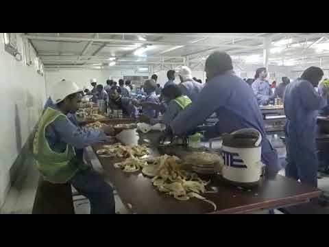 Misfa Muscat all turqi camp labor mas