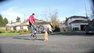 bmx how to bunny hop higher