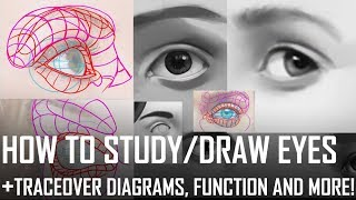 How to study/draw eyes! Traceover diagrams, function and more!