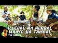Illegal na Herbal Maayo na Tambal | The Farmer
