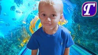 Шоу Дельфинов Медуз Детский Магазин Игрушек в Аквариуме США Влог Макс в видео для семей