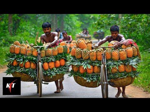 Amazing Pineapple Production Process