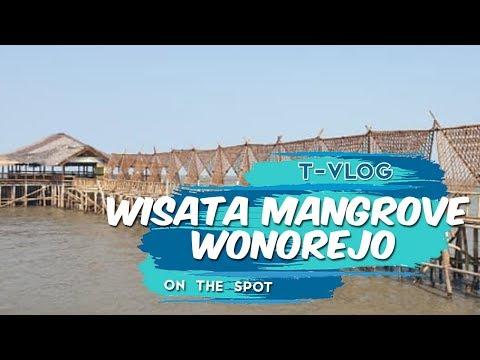 seru,-naik-perahu-menyusuri-hutan-bakau-di-ekowisata-mangrove-wonorejo,-wisata-pantai-timur-surabaya