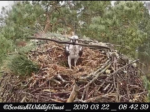 Laddie brought at least 10 sticks this windy morning ~ ©Scottish Wildlife Trust, Lowes