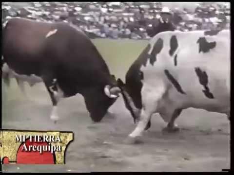 NUBE BLANCA  ⓥⓢ INDIO   Arequipa Perú