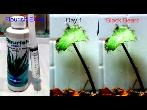017: Flourish Excel Vs. Black Beard Algae