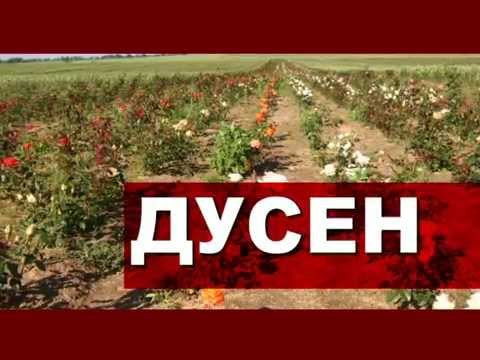 Плодовый питомник ООО Дусен, Могилевская обл., Беларусь