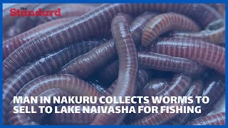 Man from Nakuru collects worms to sell to fishermen in Lake Naivasha making almost sh 1000 per day