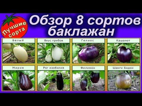 ОБЗОР 8 СОРТОВ БАКЛАЖАН (лучшие сорта баклажан)