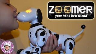 Zoomer Dog test and review - Wir testen den Zoomer Hund