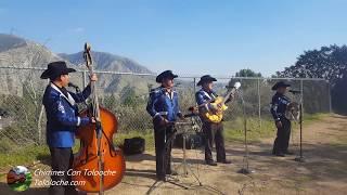 La de los Hoyitos Chirrines Con Tololoche en California 818-290-4645