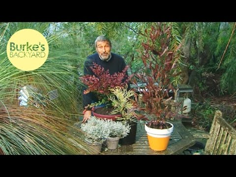 Burke's Backyard, Colourful Australian Native Plants