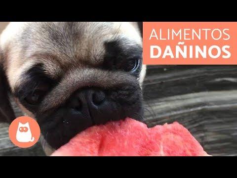 10-alimentos-daÑinos-para-tu-perro