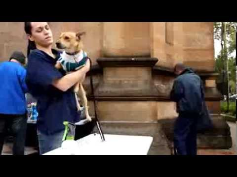 Pets in the Park Charity - Sydney Morning Herald Video