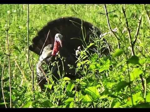2017 Spring Gobbler Turkey Hunting - Julie's First Turkey
