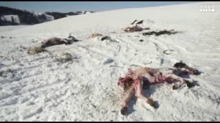 Gelo record in Mongolia, allarme per gli animali