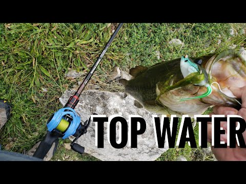 Topwater Morning Bite Compilation