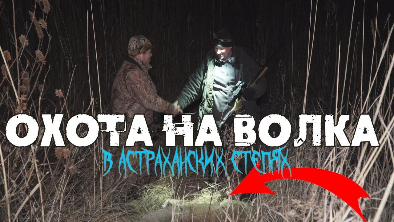 Охота на волка с Астраханским волчатником. Выстрел и попадание в кадре! Волк и два шакала добыты!