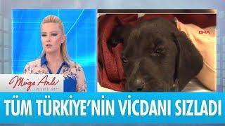 Tüm Türkiye'nin vicdanını sızlattı - Müge Anlı İle Tatlı Sert 18 Haziran 2018