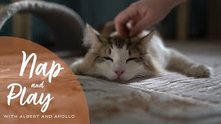 What Norwegian Forest Cats Do All Day