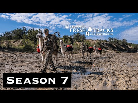 Chasing Bull Elk With Uncle Jimmer: New Mexico Archery Elk | (Amazon Episode)