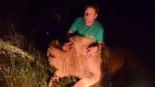 ЭКСТРИМ  ВИДЕО !!! Ночь в Саванне , КОРМИМ ЛЬВОВ !! Feeding lions in the dark