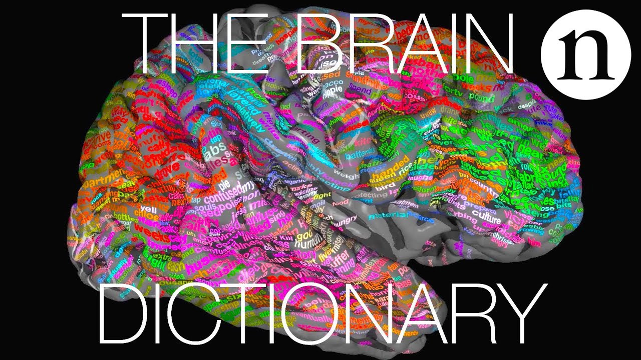 The brain dictionary
