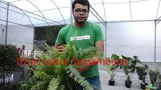 Samambaias e Folhagens lindas, dicas e cuidados em sua casa Plantar em Casa