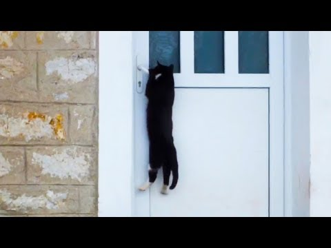 'Clever Cats Opening Doors Compilation' || CFS (2018)