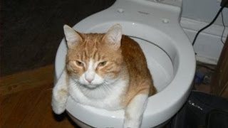 LolCat Steps: Guide To Toilet Training