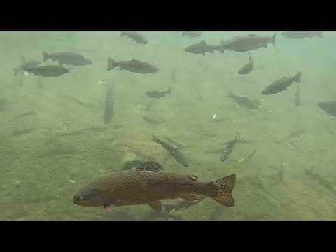Cold Springs Trout Farm Fishing Catch And Cook Rainbow Trout