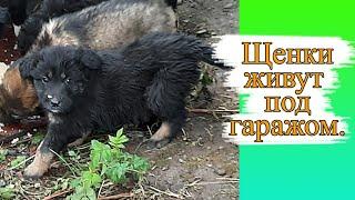 Зоовлог. Бездомные щенки живут под гаражом. Поилка для шиншилл.