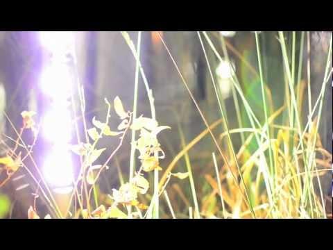 Make Music Winter - The Gaits: a High Line Soundwalk