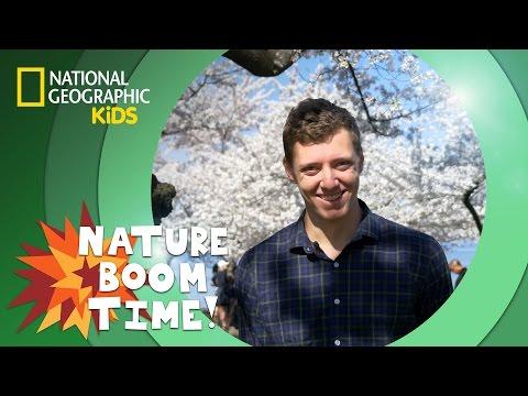 Cherry Blossom Festival | NATURE BOOM TIME