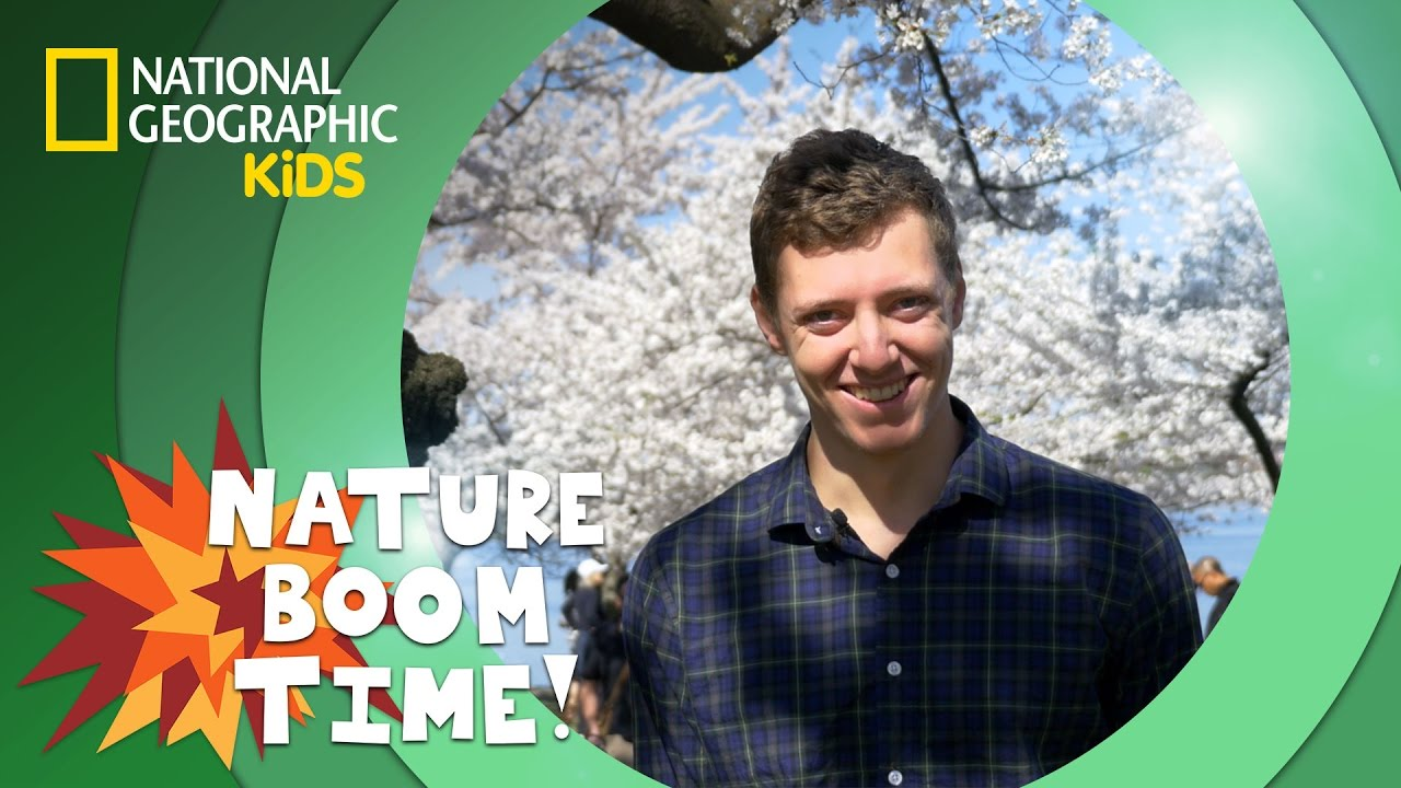 Cherry Blossom Festival | NATURE BOOM TIME