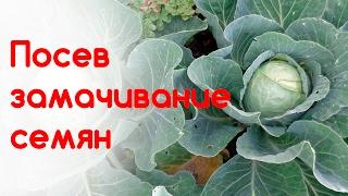 Посев ранней капусты. Замачивание семян капусты. Часть 1